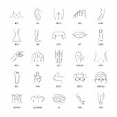 Line Human Male And Female Body Parts Vector Set Icons. Anatomy Body Part, Contour Leg And Breast Il poster