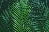 Palm Leaves, Coconut Leaves. Greenery Background. Tropical Leaf Background poster