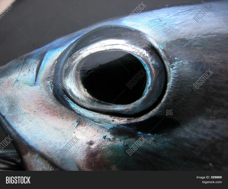 tuna fish eye image amp photo bigstock
