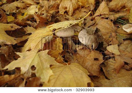 Hidden mushrooms