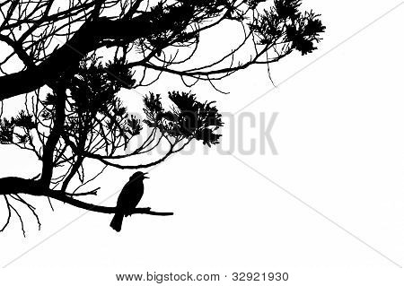 Silhouette of singing Common Blackbird in a tree