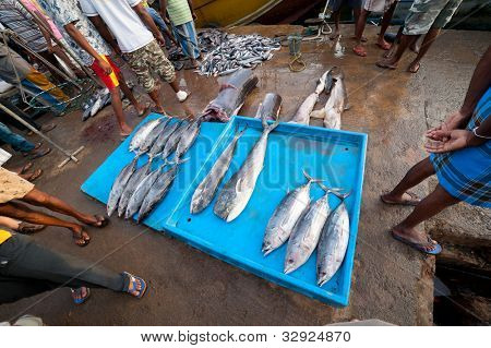 Fresh ocean fish at the street market in Sri Lanka
