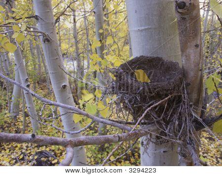 Bird Nest In Aspen Grove