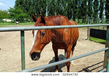 brown horse in a cowshed concept of captivity