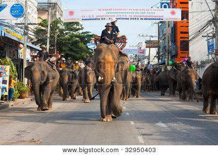 Surin Elephants Roundup Parade Downtown