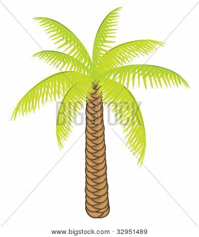 Vector color palm tree