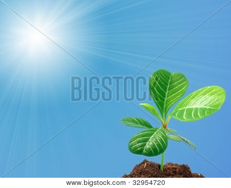 Growth: Young Sprout Against Sky With Sun