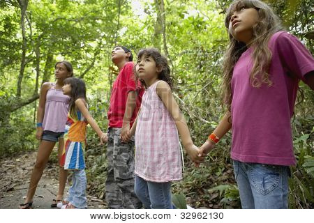 Hispanic children exploring woods