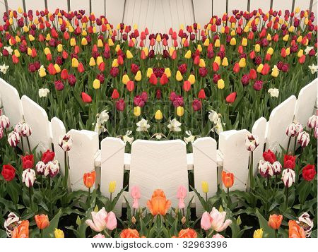 Multi-colored tulips surrounded by a white picket fence.