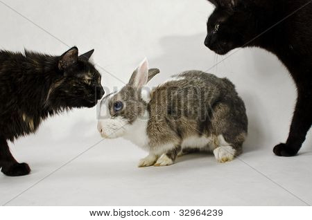 cats and rabbit