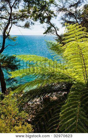 Subtropical forest of Abel Tasman NP, New Zealand