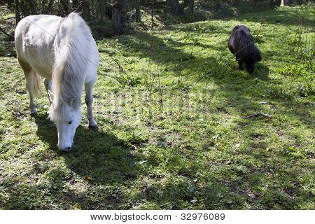 Black Horse, White Horse
