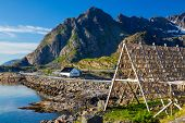 Henningsvaer village, Lofoten Islands, Norway, Traditional Drying cod, drying on wooden racks in Lof poster