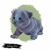 Nebelung Kitten Digital Art Illustration. Longhaired Russian Blue Watercolor Portrait In Realistic M poster