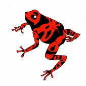 Frog Cartoon Tropical Red Animal Cartoon Nature Icon Funny And Isolated Mascot Character Wild Funny  poster