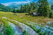 Landscape View Of Sapa Valley In Lao Cai Province In Vietnam poster