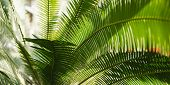 Creative Tropical Green Leaves Layout. Nature Summer Concept. Tropical Palm Foliage. Sun Over Green  poster
