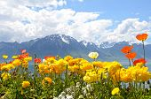 picture of montre  - Flowers against mountains and lake Geneva from the Embankment in Montreux - JPG