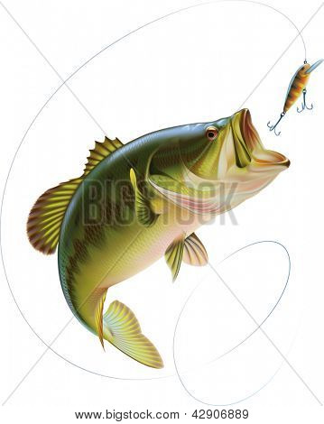 Largemouth bass is catching a bite and jumping in water spray. Raster image. Find an editable version in my portfolio.