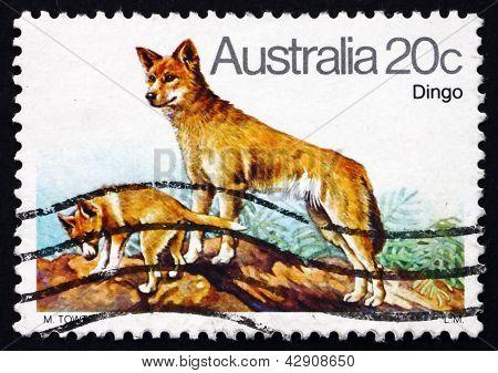 Estampilla Australia 1980 Dingo, perro salvaje australiano