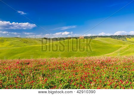Tuscany Landscape In Val D'orcia With Flowers, Pienza, Italy