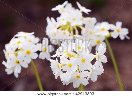 Hübsche weiße Blumen blühen im Garten