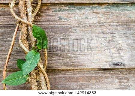 Close View Of A Vine Against Rustic Wood Boards.