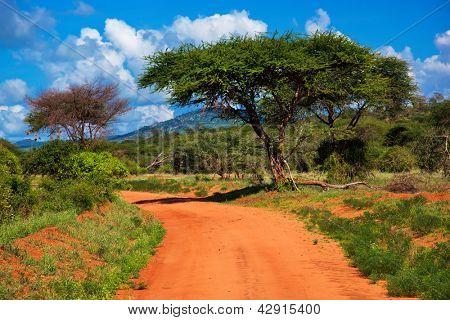 Camino de tierra roja y bush con paisaje de sabana en África. Tsavo Oeste, Kenia.