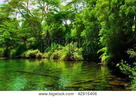 Jungle, green bush and water spring in Africa. Tsavo West, Kenya