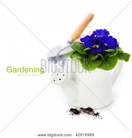 Fresh primulas and garden tools over white (with easy removable sample text)
