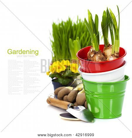Spring flowers and garden tools  isolated on white (with easy removable sample text)