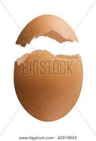 Eggshell Isolated On White Background