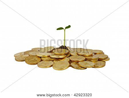 A Bunch Of Coins With A Small Plant Stalk Coming Out Of It