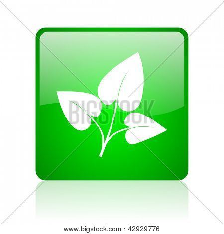 eco green square web icon on white background