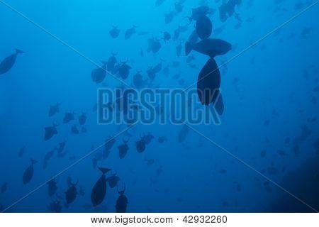 School Of Fish In Deep Ocean Waters