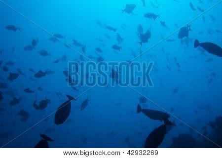 Wonders Of Undersea Life