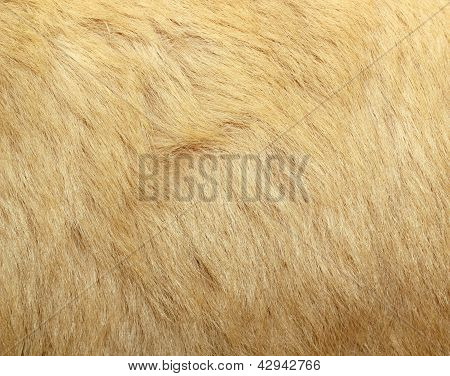Detail Of Polar Bear Fur