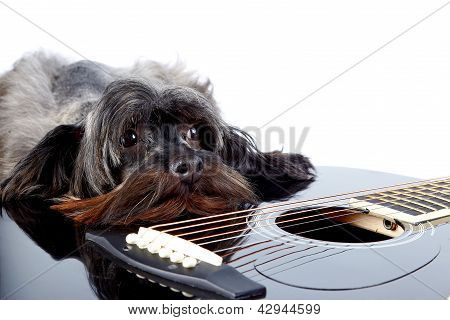 Portrait Of A Dog With A Guitar
