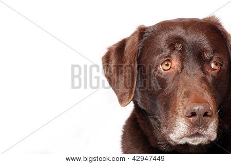 Worried Dog