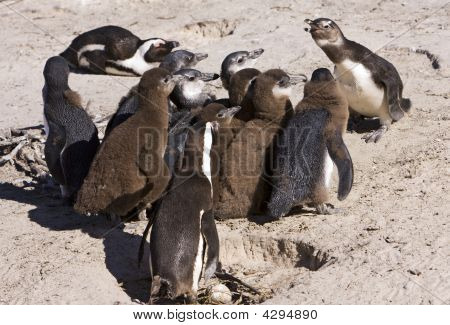 Penguin Colony At School