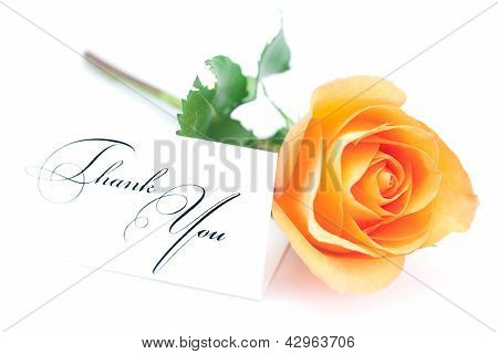Beautiful Orange Rose And A Card With The Words Thank You Isolated On White