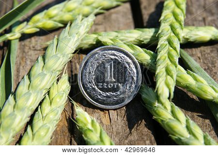 Ears of wheat and one zloty