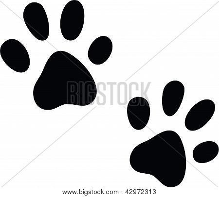Vector cats paws