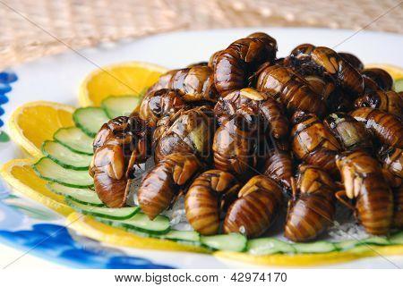 Fried Cicada