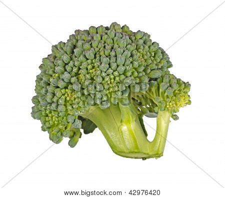 Floret Of Broccoli Isolated Against White