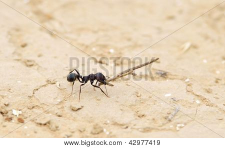 Working Ant