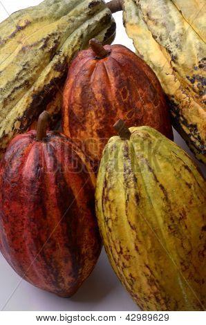 Cocoa Fruits Ensemble