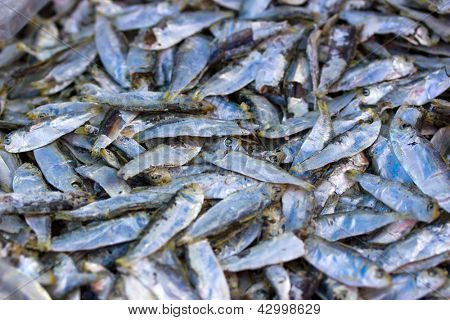 Chub mackerels, sea fish in Thailand