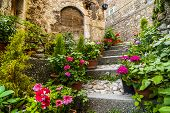 stock photo of house-plant  - Calascio  - JPG