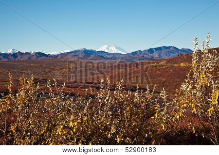 Denali in Autumn